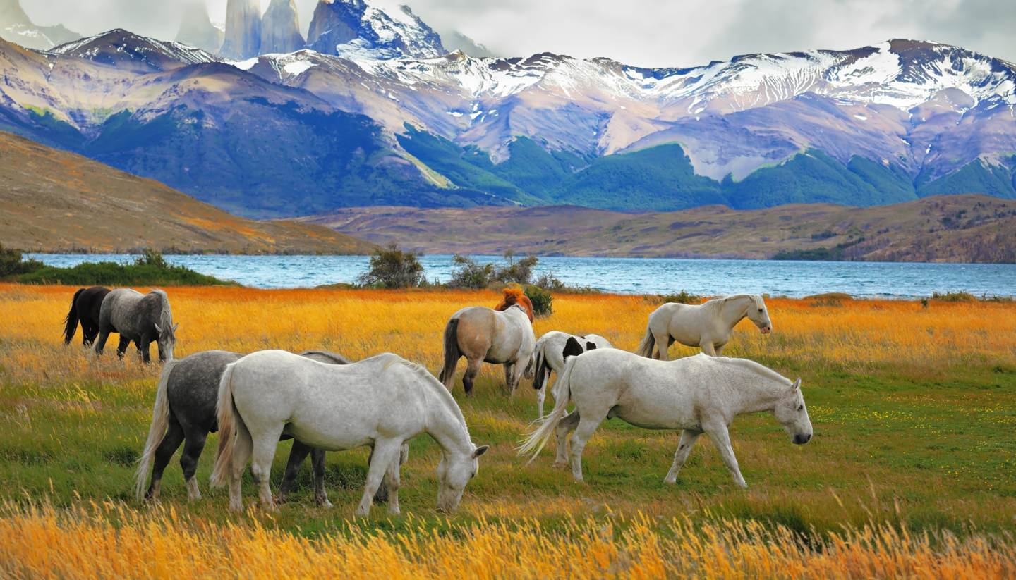 Chile - Torres Del Paine National Park in Chile