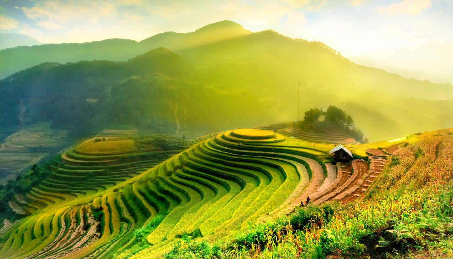 Home - Terraced rice fields in Mu Cang Chai, YenBai, Vietnam.