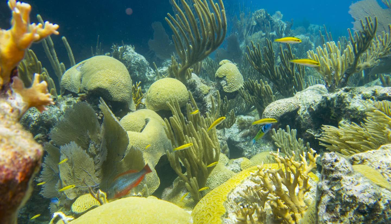Bermudas - Coral Reef, Bermuda