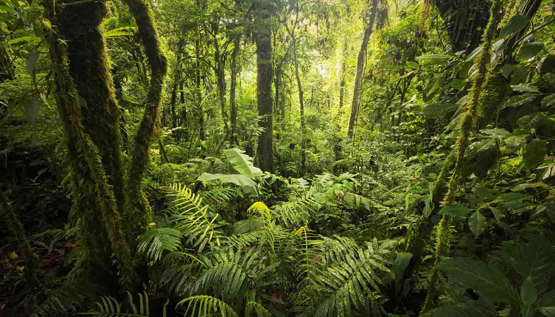 Costa Rica - Cloud forest, Costa Rica