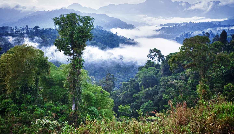 Ecuador - Rainforest, Ecuador