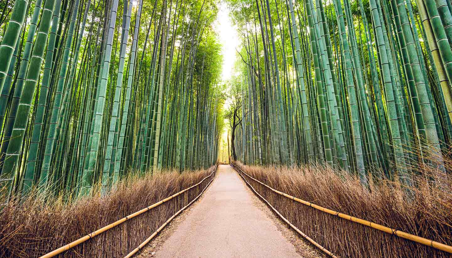 Japón - Bamboo Forest Kyoto, Japan