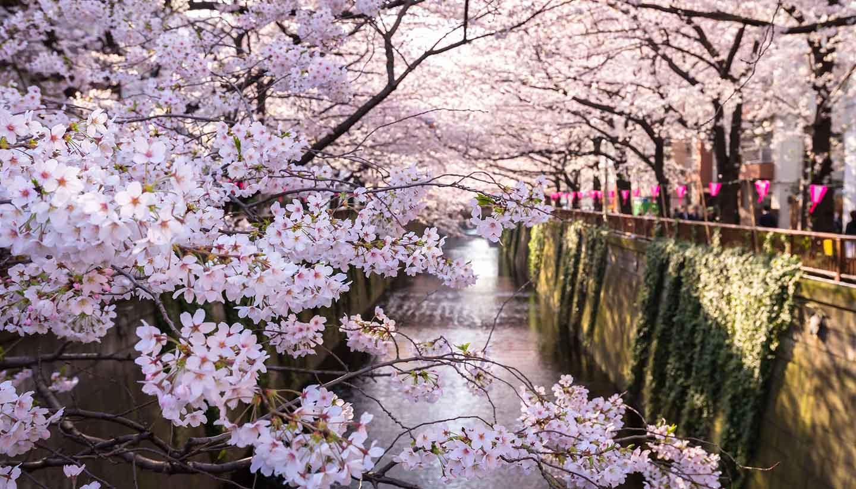 Japón - Meguro Canal in Tokyo, Japan