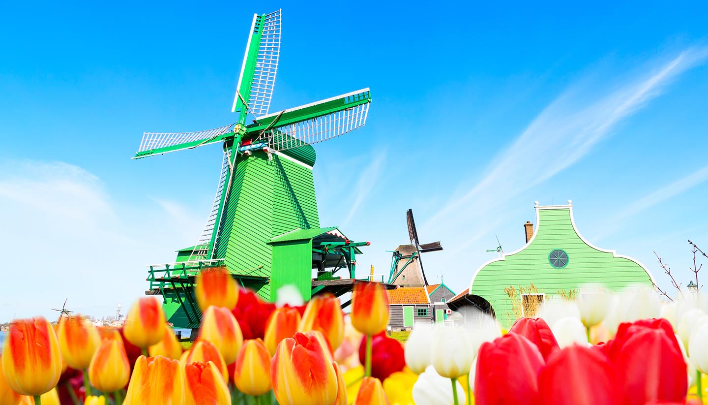 Holanda - Tulips & Windmill, Netherlands
