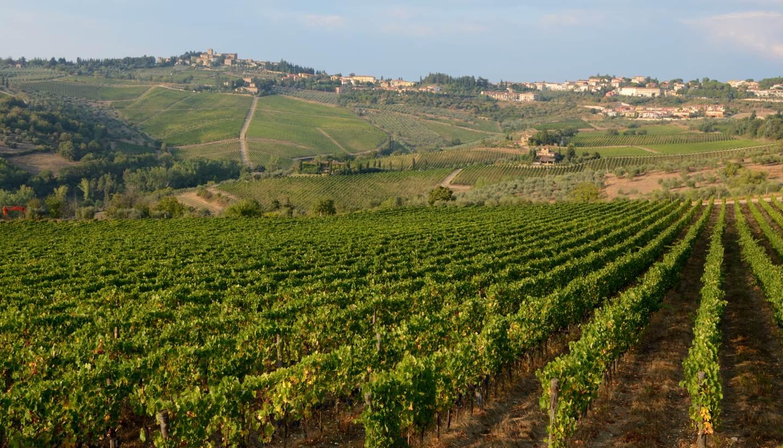 Italia - Vinyard in Tuscany