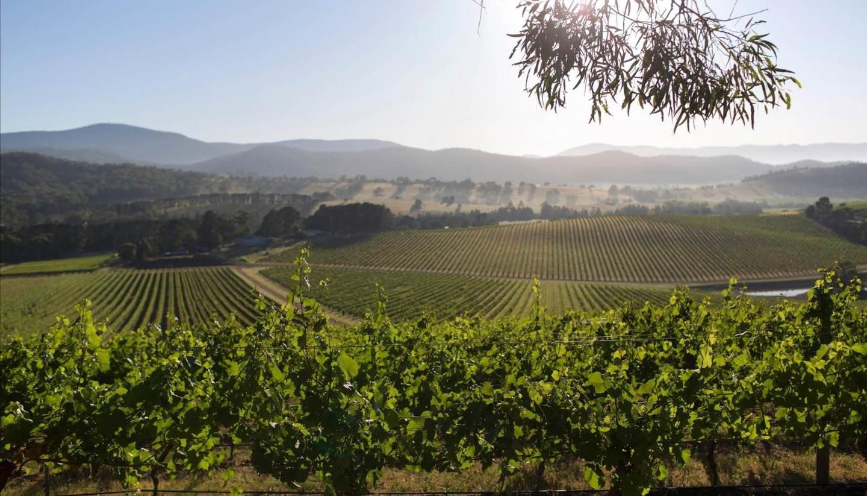 Australia - Australian vineyard-1440x823